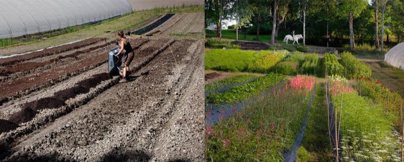 Harvest-kollasj-JORD1-Anja-Bruland-Foto-Nina-Ruud