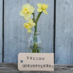 Narciss Yellow Cheerfulness 5 stk