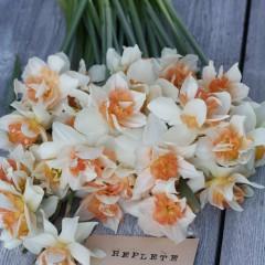 Narciss Replete 5 stk