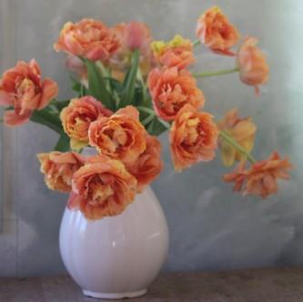 Tulipan Sensual Touch 10 stk