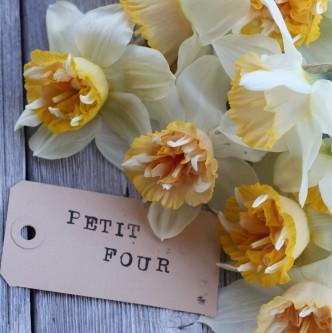 Narciss Petit Four 5 stk