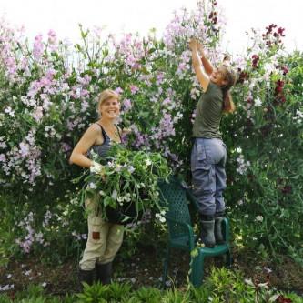 blomsterdyrking i hagen 5.juni
