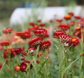ekstrakurs blomsterdyrking i hagen 9.september