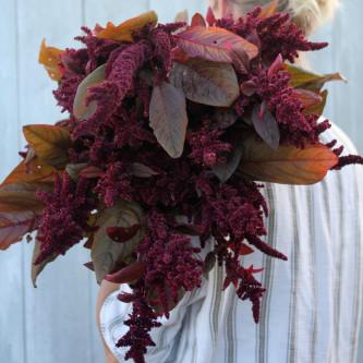 Amarant Hopi Red Dye