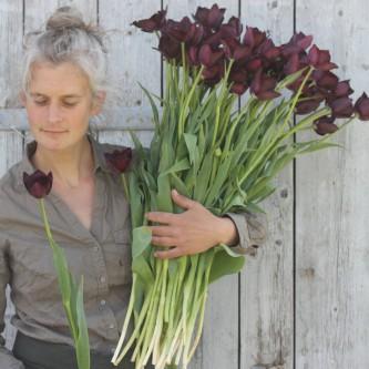 Tulipan Fringed Black 10 stk