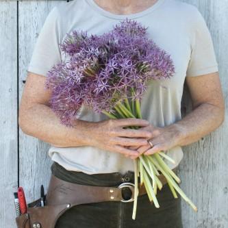 Prydløk Allium christophii 10 stk