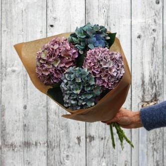 Hortensiabunt i melankolske høstfarger