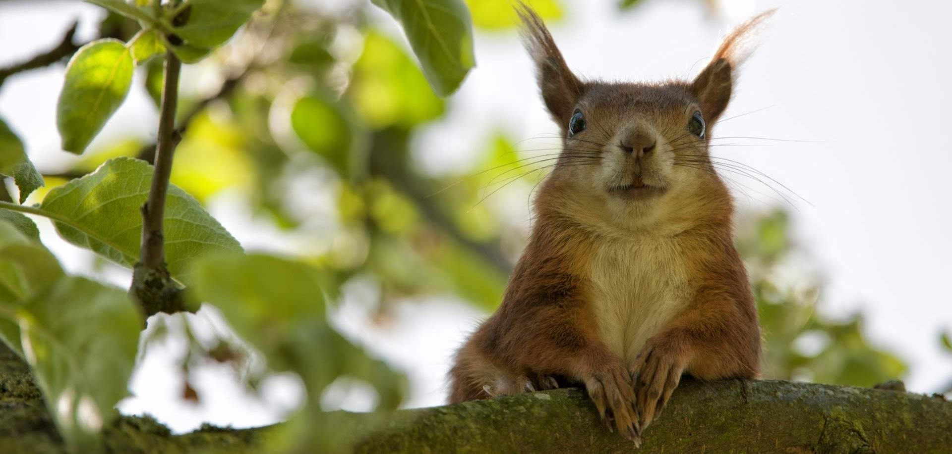 brown-squirrel-closeup-photography-162061_2__1