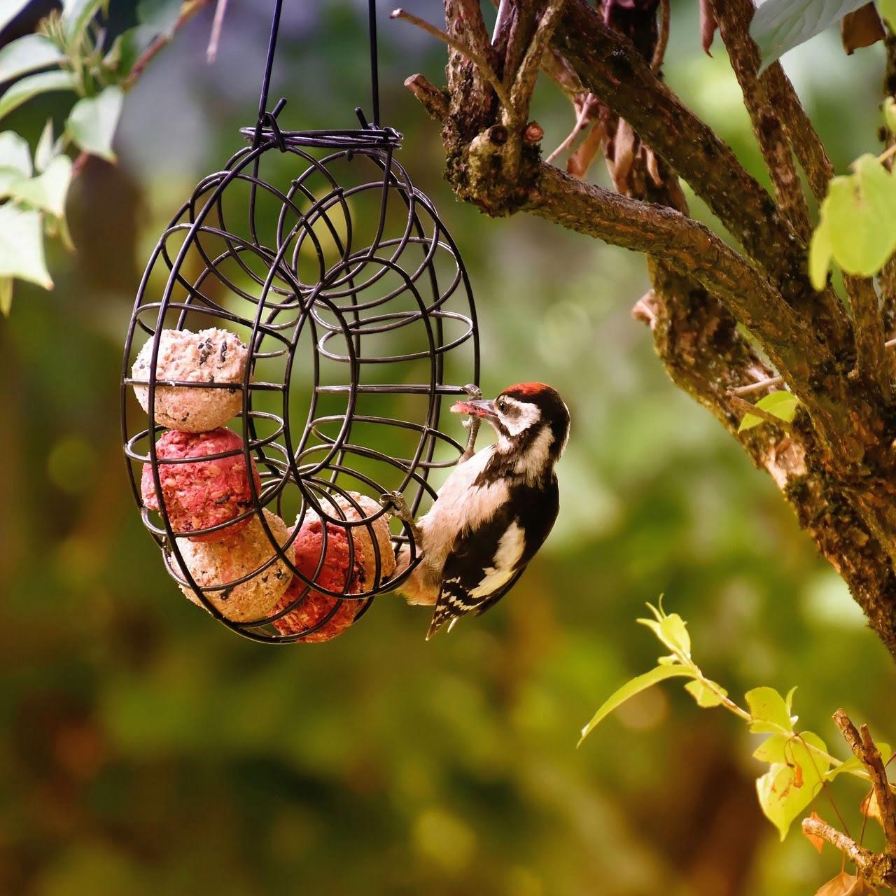woodpecker-4330495_1920_1_